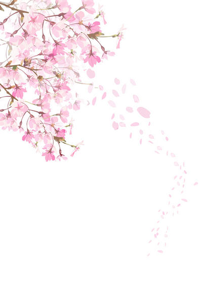 Rose Petals Falling Wallpaper Transparent Gif Falling Blossoms Upon A Grave Souji Okita Hakuouki By