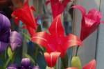 Origami Flor Iris