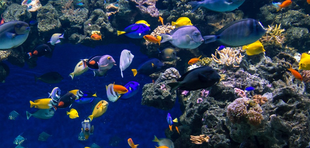 Fish Tank 3d Live Wallpaper For Pc Check Out The Orphek Blue Planet Aquarium Project Reef