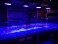 ORPHEK LED LIGHTING NOW AVAILABLE IN MEXICO Aquarium LED ...