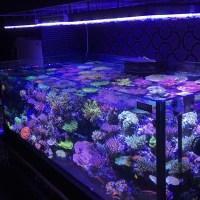 best aquarium - DriverLayer Search Engine