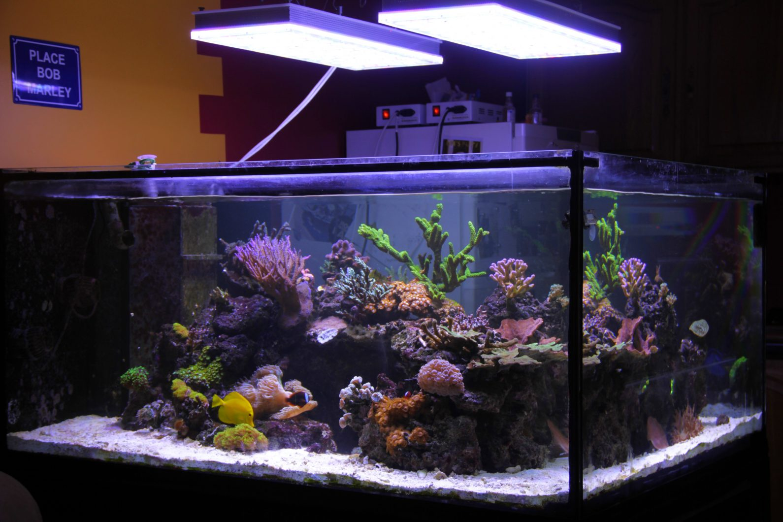 Aquarium Bottom Light Tank Development In France After 2 Years Running Atlantik