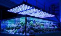 German Store Displays Beautiful Coral Atlantik V4 LED ...
