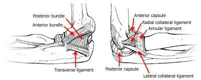 elbow ucl diagram