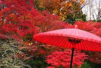 japanese-style_00005.jpg.pagespeed.ce.7IBRjMNI4F