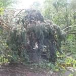 połamane drzewa_ul.Przemysłowa_04