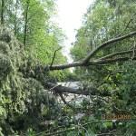 połamane drzewa_ul.Przemysłowa_05