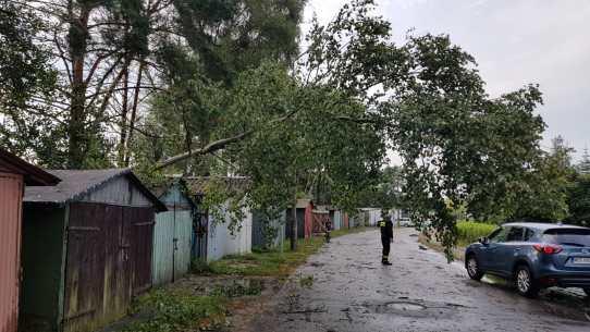 Pochylone drzewo ul. H.Modrzejeswkiej