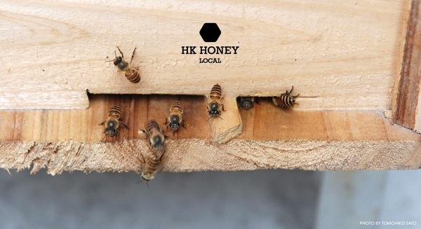 HK-Honey-2