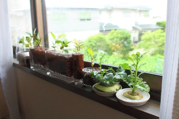 若杉さん家の窓際菜園
