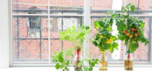 これなら窓際でも!ペットボトルで家庭菜園ができる「ペットマト」シリーズ15種