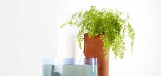 フランス生まれの家庭用ビオトープ。お魚と植物が仲良く過ごす生態系を家庭に