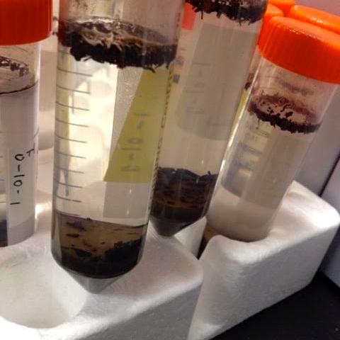 土壌研究室での様子