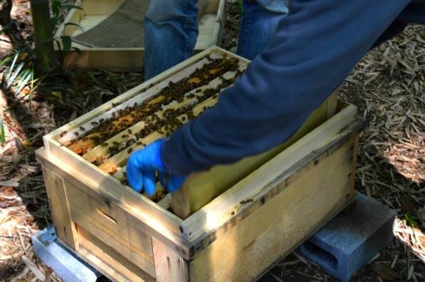 蜜蜂の巣箱チェック