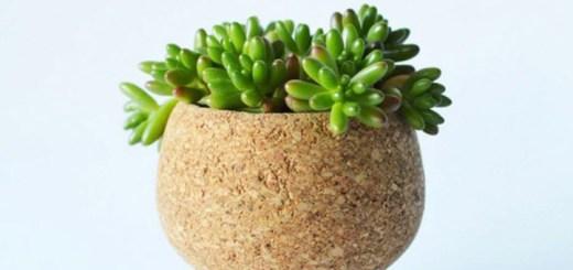 多肉植物がコルクの容器に。曲線美のプランター「CORK PLANTER」