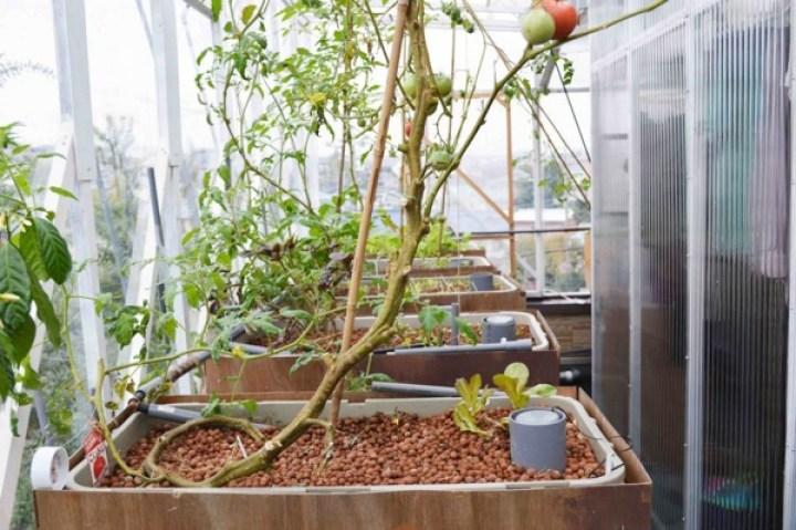 バルコニーでDIY菜園。3ヵ月かけて英国人が完成させたアクアポニックス栽培システム