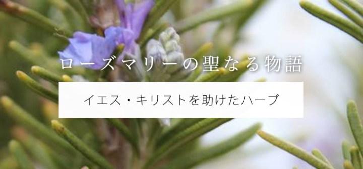 日本人が知らない「ローズマリー」の聖なる物語ーーイエスを助けたハーブ
