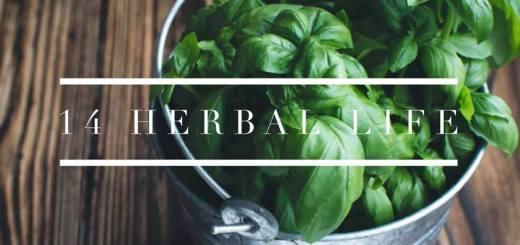 ハーブの活用法14パターン|食べて、飲んで、香って、癒されて、遊んで