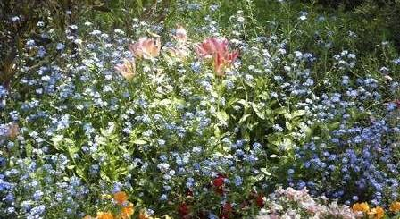 ハーブ今昔ものがたり「ネアンデルタール人の花束」