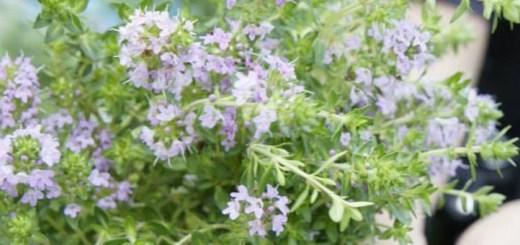 じつは身近にある「和」のハーブ。それは日本の風土に息づく宝物
