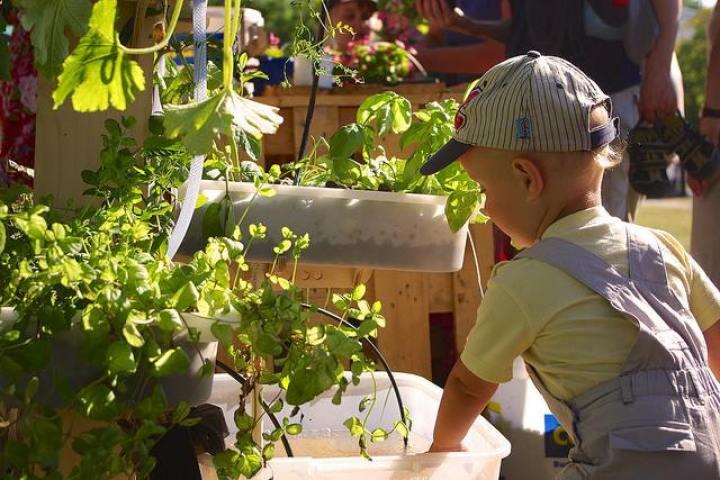 子供の食育にもよいアクアポニックス - Photo credit: Maciej Wojnicki  via Flickr