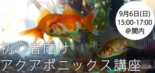 【国内初】初心者向けアクアポニックス講座、9月6日(日)関内にて開催!基礎を学ぼう、はじめよう