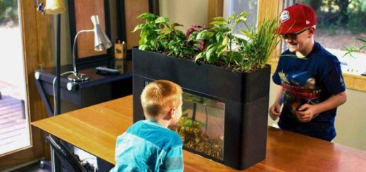 家に生態系がやってくる!家庭用アクアポニックス、12月発売予定。事前登録受付中