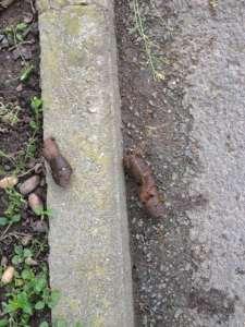 Dog-poop-in-France-2