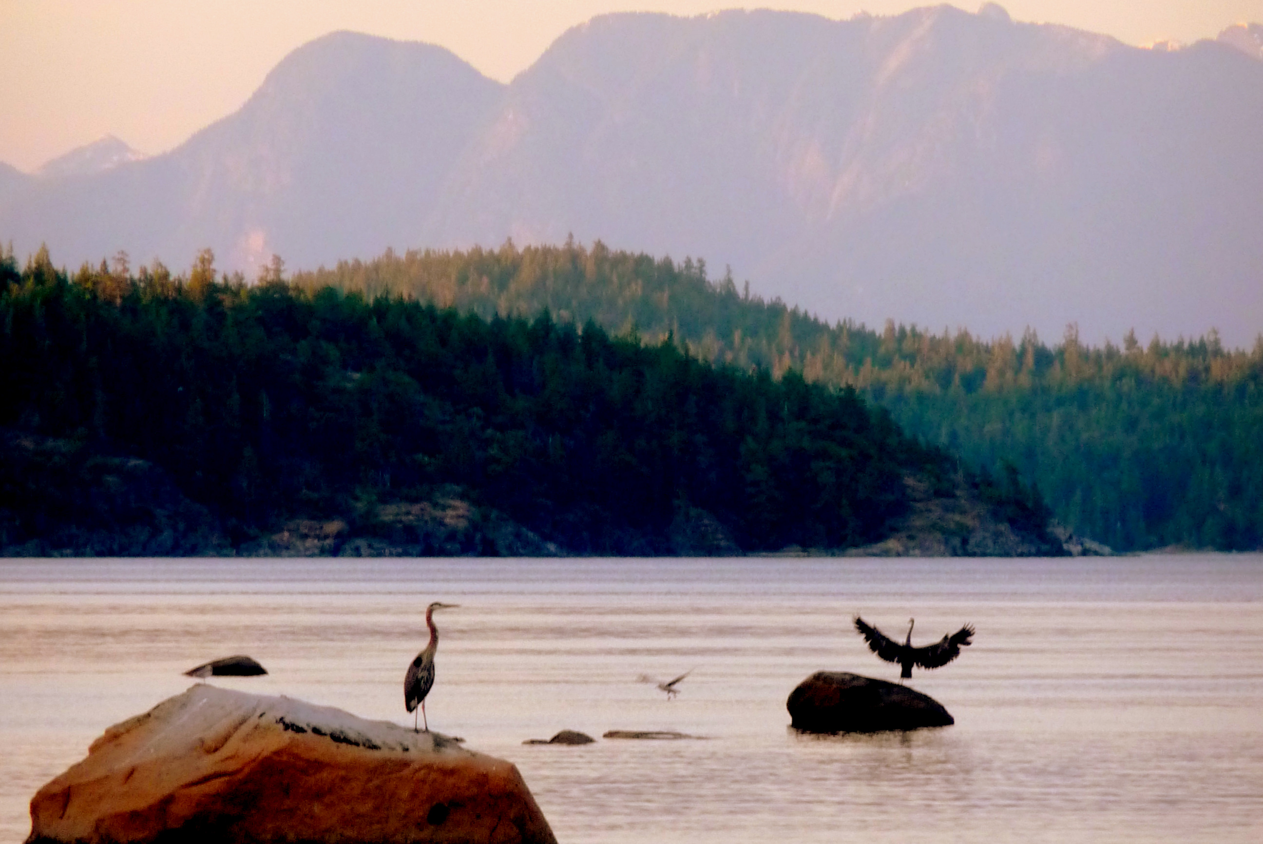 Cortes Island: Paradise on the Edge of Wilderness