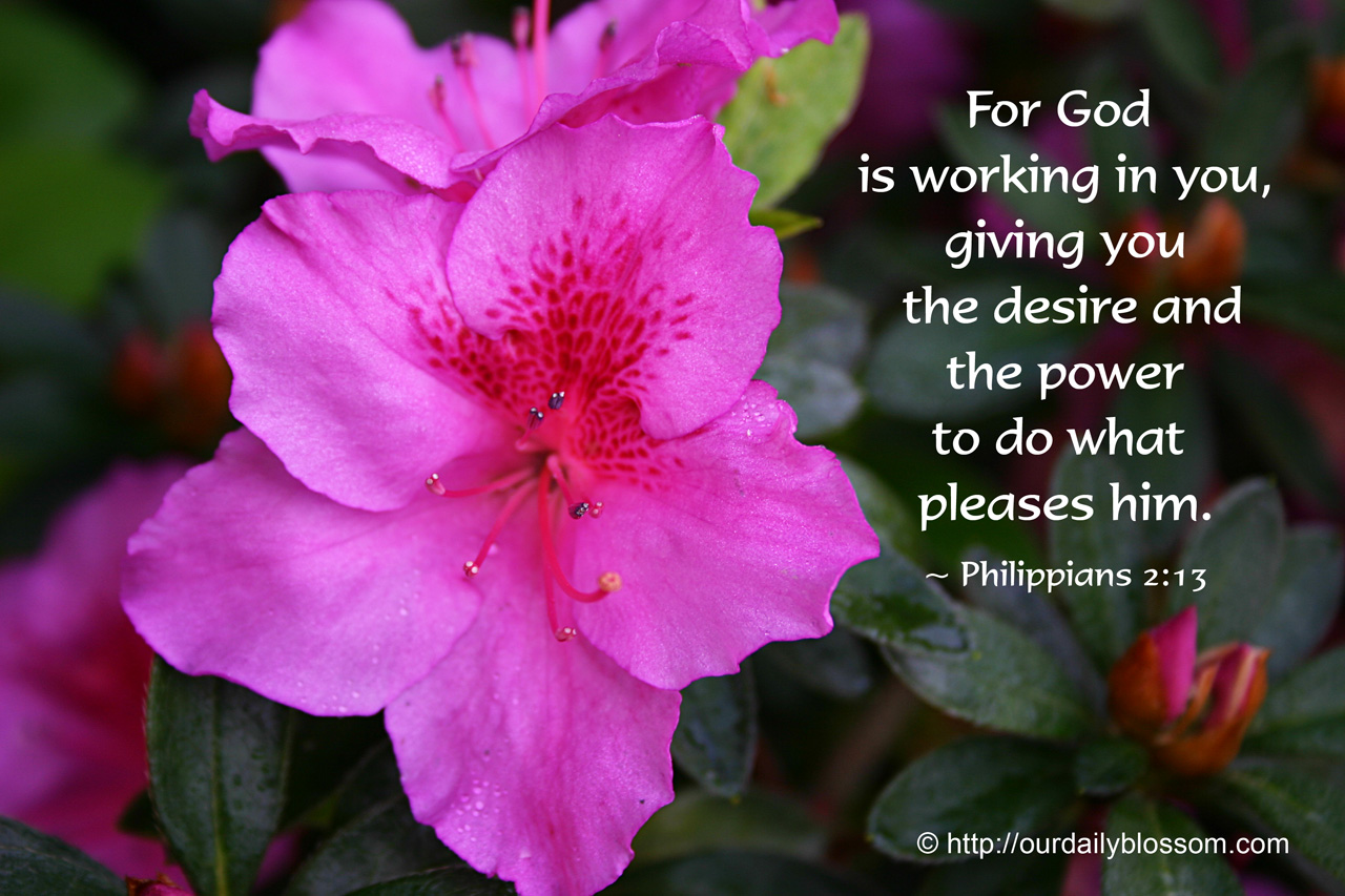 Inspirational Quotes Clean Wallpaper Bible Verse Philippians 2 13 Our Daily Blossom