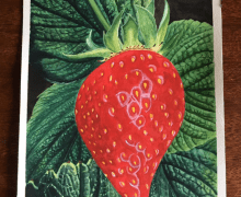 I painted this solo strawberry with this thing in mind: That the Lord Jesus Christ is the heart of my life.