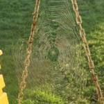 Spider Webs Everywhere!