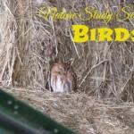 Nature Study – Birds