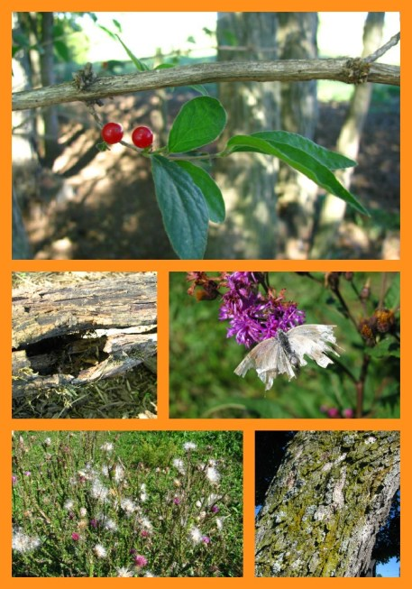 Early fall nature studies are full of opportunities!