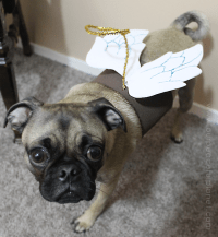 Small Dog Halloween Costume & Patterns | Our Peaceful Planet