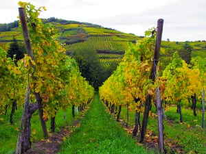 Five Lesser Known Old World Wine Regions