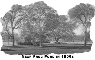 frog-pond-edited-2