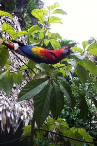 Greetings from the Kapitari Macaw