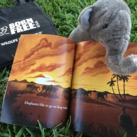 Exciting New Tool, What Elephants Like, From Born Free USA Supports Teaching Children About Wildlife & Giveaway