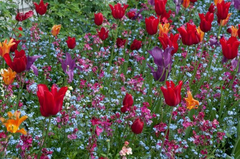 Tulips at The Inner Temple Garden