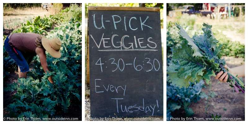 Nevada City Food Love Project, You Pick Veggies