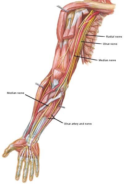 Ulnar Nerve Entrapment Treatment \u2013 Overhaul Training