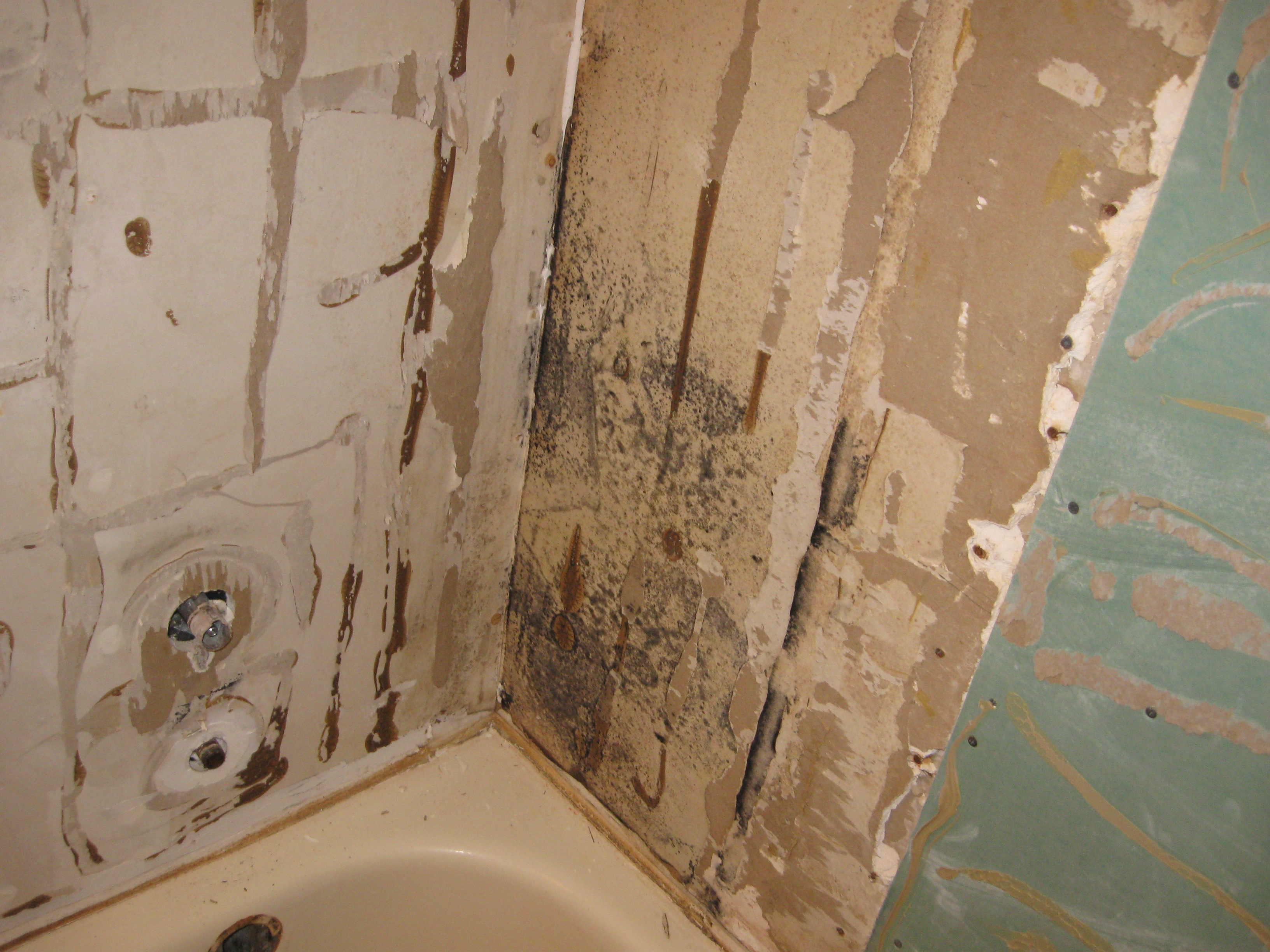 Schimmel Douche Get The 411 On Bathroom Mold