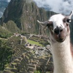 CONTEST: Bossy the Llama – Meme Caption
