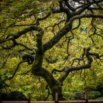 Reaching Photographic Zen at the Portland Japanese Garden