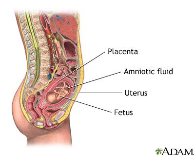 14 Weeks Pregnant Belly Diagram Wiring Schematic Diagram