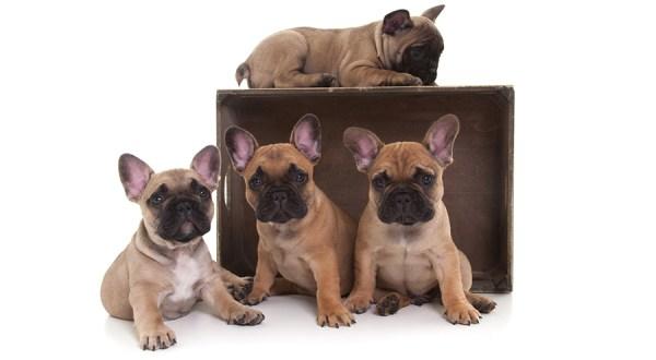 Owiwi Puppy Fototshoot