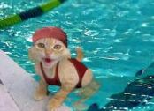 chat natation