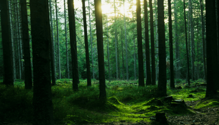 Forest_landscape_with_trees___Flickr_-_Photo_Sharing_