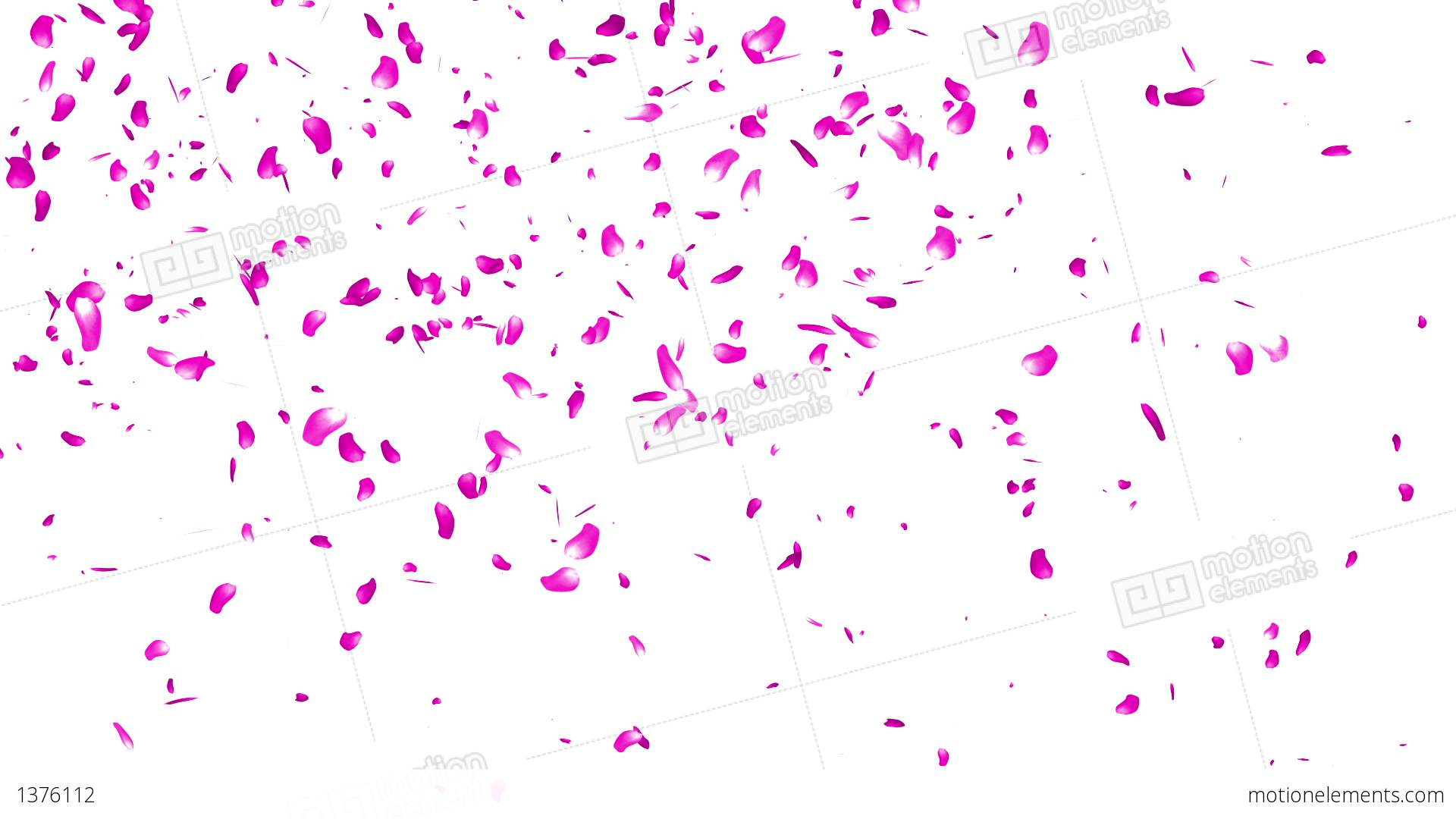 Falling Cherry Blossom Wallpaper Hd Falling Sakura Petals Cherry Blossoms 3 Stock Animation